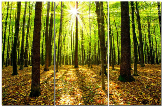 "Magical Forest w/ Sunlight & Leaves On Ground 12"" x 24"" 3 Piece Canvas Print Set"