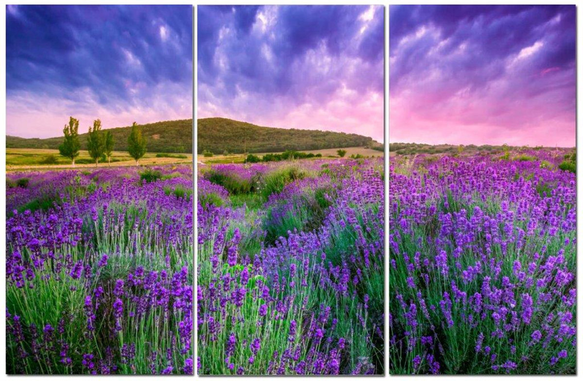 "Purple Flower Fields w/ Green Meadows & Hills 12"" x 24"" 3 Piece Canvas Print Set"
